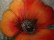 Poppy. Acrylic on canvas. 60x80. 2018